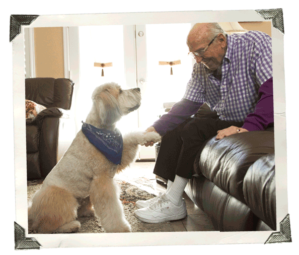At Home Pet Therapy